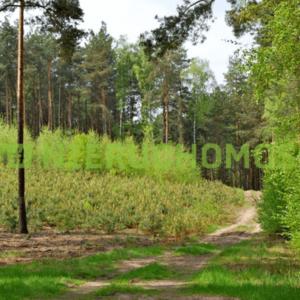 działka pąchy 300x300 - Działka 80 km od Poznania - Pąchy
